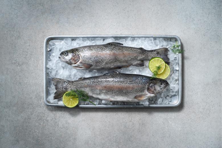Süsswasserfisch